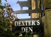 dexters-den_600x448