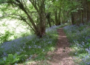 bluebell-walk_600x450