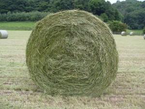 hay making at paddocks