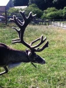 antlers paddocks farm